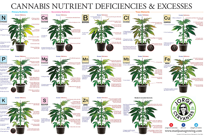 Nutrient Deficientcies (2)