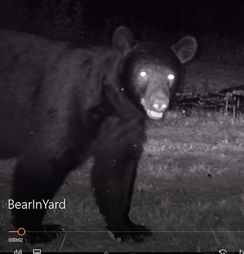 BearInYard